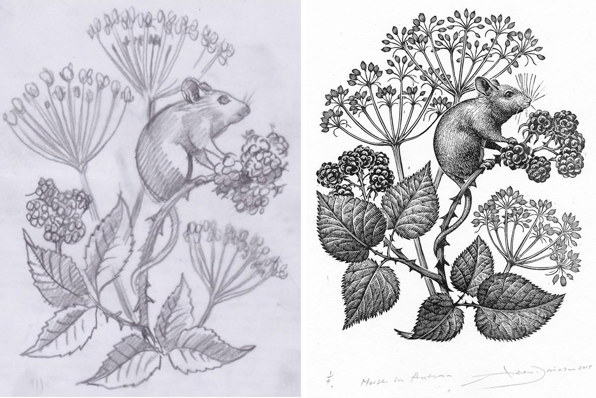 Milne-Graden-Harvest-Mouse-Sketch-and-Final print