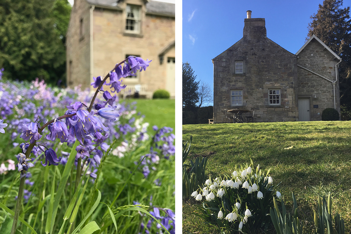 Milne-Graden-Garden-House-Holiday-Cottage-Exterior-Bluebells -snowdrops