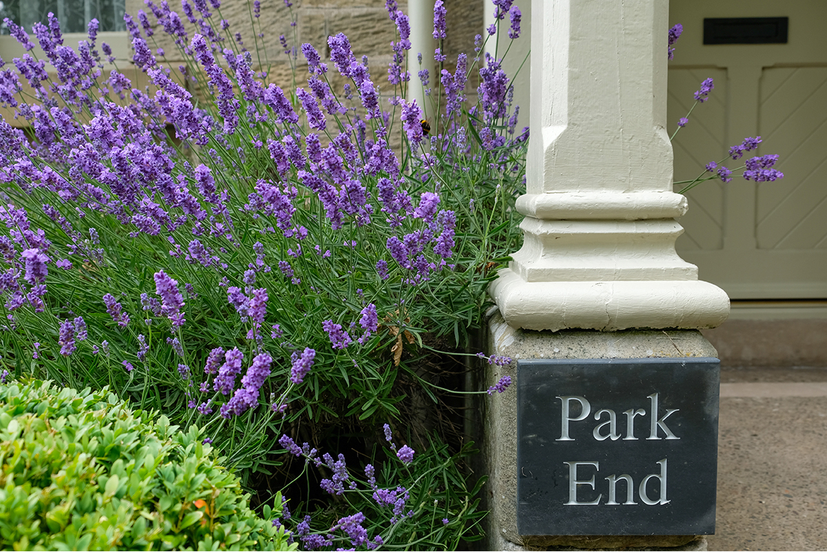 http://talesofthetweed.co.uk/wp-content/uploads/2020/07/Milne-Graden-Summer-Park-End-Lavender-at-entrance-with-bees jpg