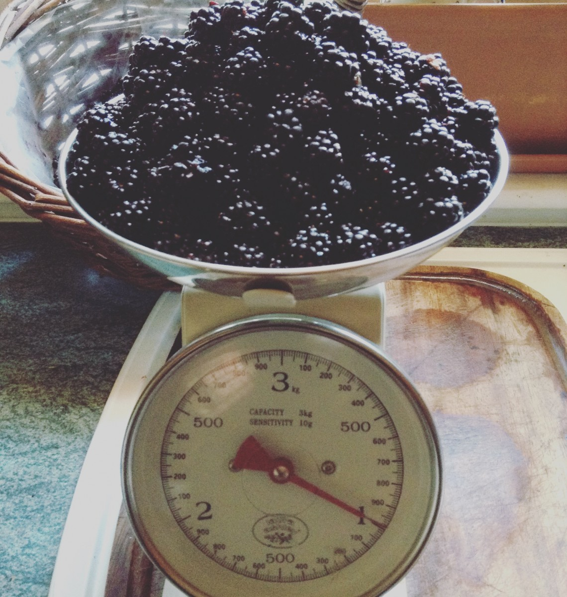 Weighing scales measuring 1kg of autumn wild brambles from a bush in Snook Field, Milne Graden. Harvest for Jenny's Wild Bramble & Sloe Gin Jelly recipe this autumn.