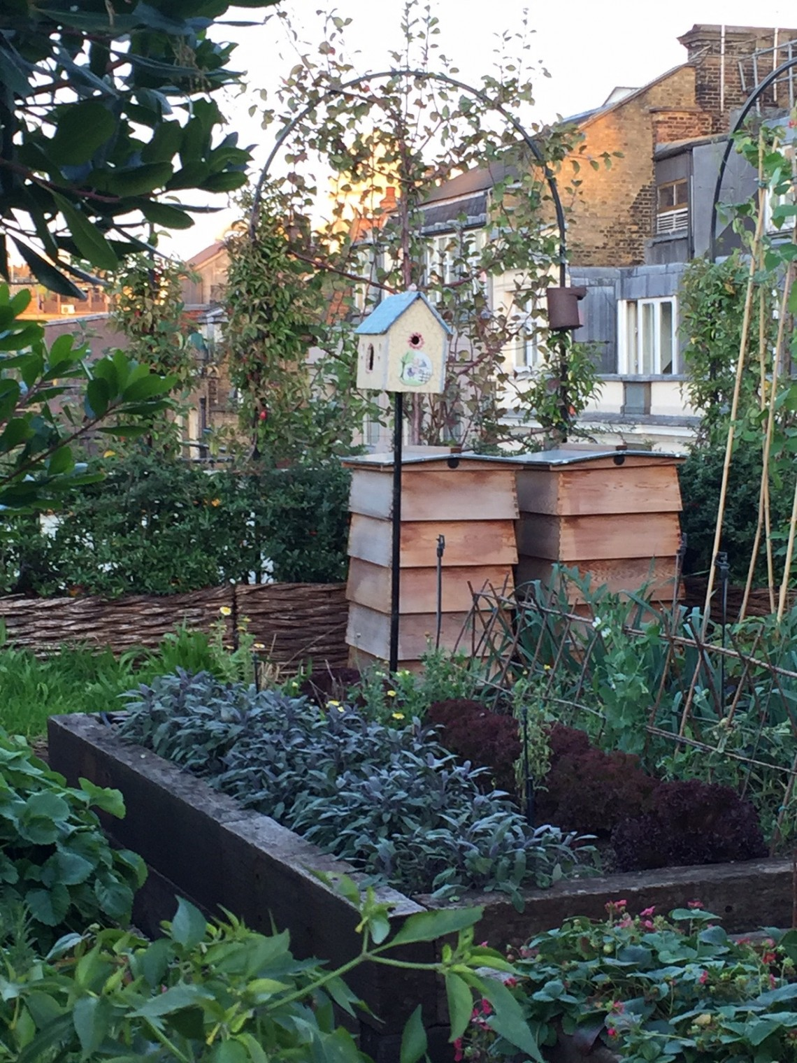 two bee hives on a roof top garden at firmdales ham yard hotel in soho london