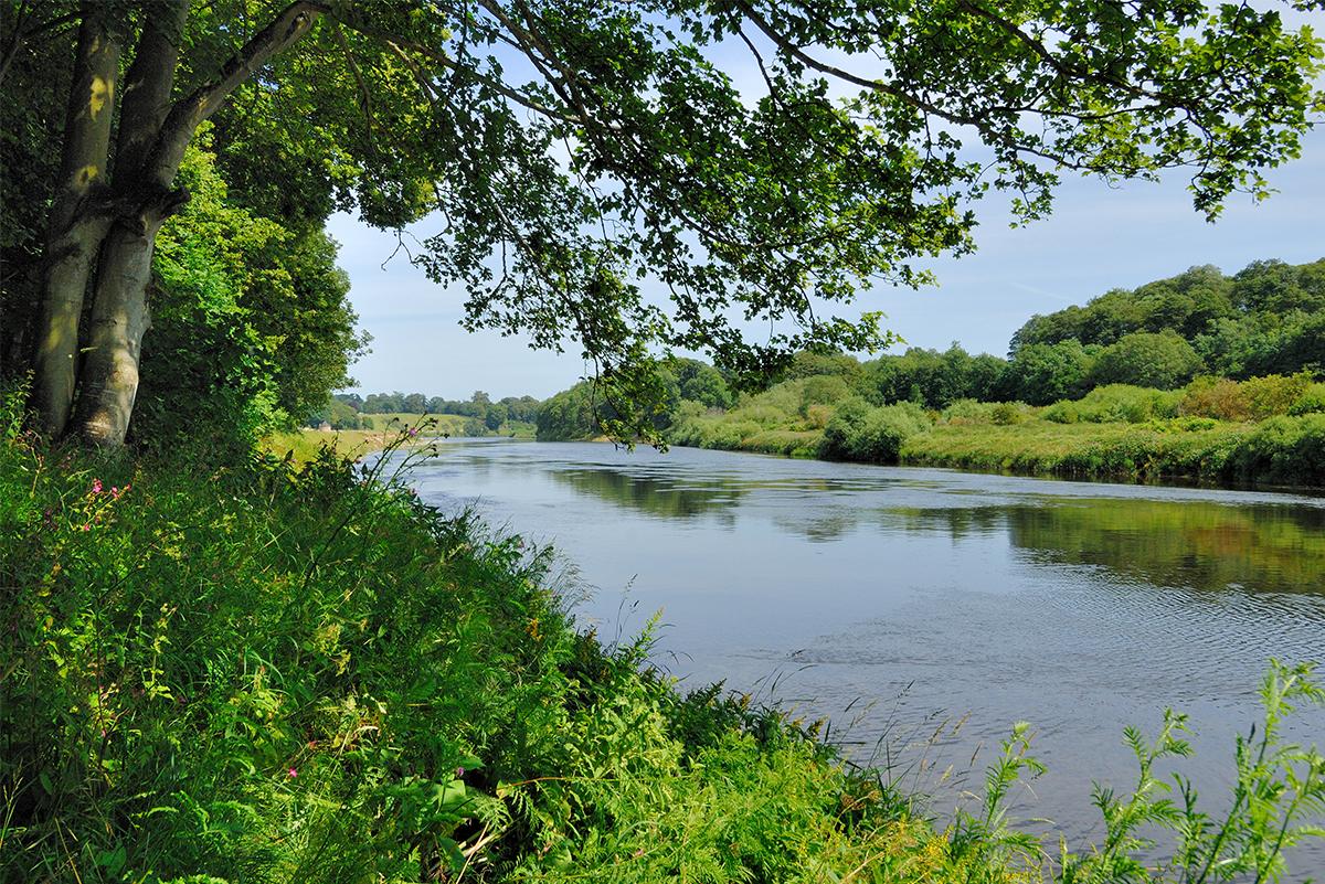 https://talesofthetweed.co.uk/wp-content/uploads/2020/07/Milne-Graden-Summer-view-of -river-Tweed-from-Riverbank.jpg