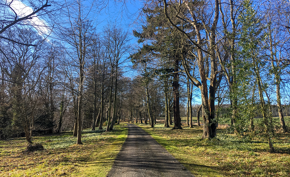 Milne-Graden-Snowdrops-on-Drive-lined-with-trees-in Spring